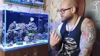 Мой мини риф