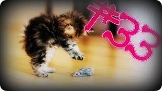 Приколы с животными №33   Котенок испугался  Смешные животные  Animal videos