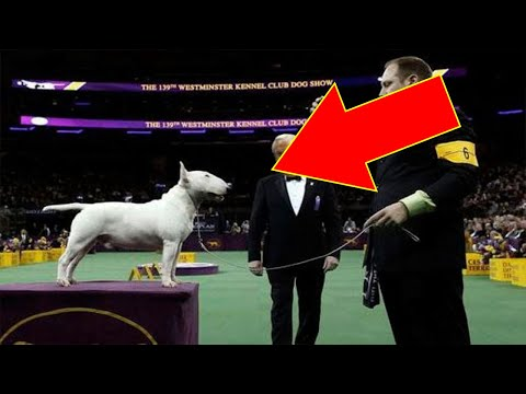 Rare Glimpse Into The National Dog Show Exposes The Unexpected Reality