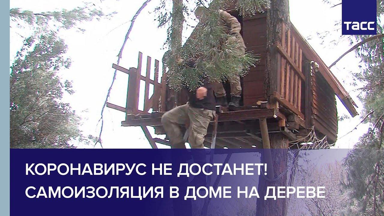 Коронавирус не достанет! Самоизоляция в доме на дереве