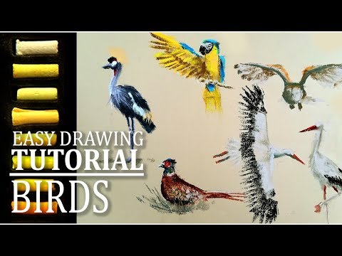 Let's sketch birds in soft pastels | Easy drawing tutorial thumbnail