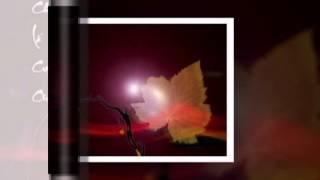 CHIEC LA CUOI CUNG - Doan Chuan Tu Linh - Guitar Hawaii DOAN DINH