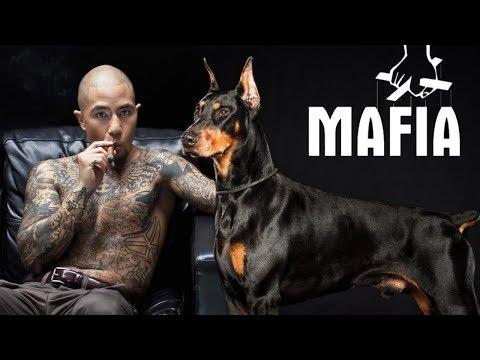 10 Dogs Most Liked by Mafia Gangs