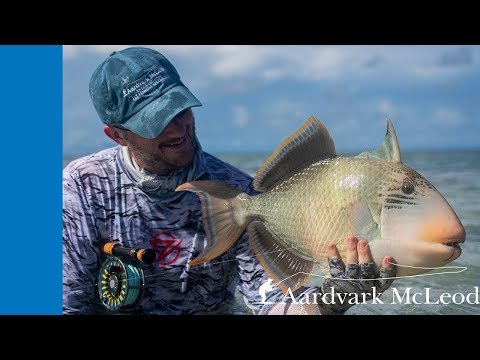 How To Catch A Triggerfish On Fly