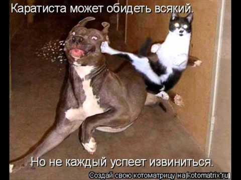 Смешные фото животных)Ржака).wmv