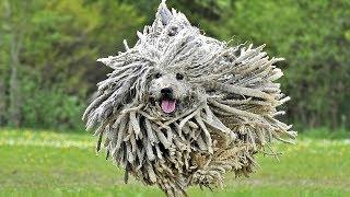 5 самых странных и необычных пород собак