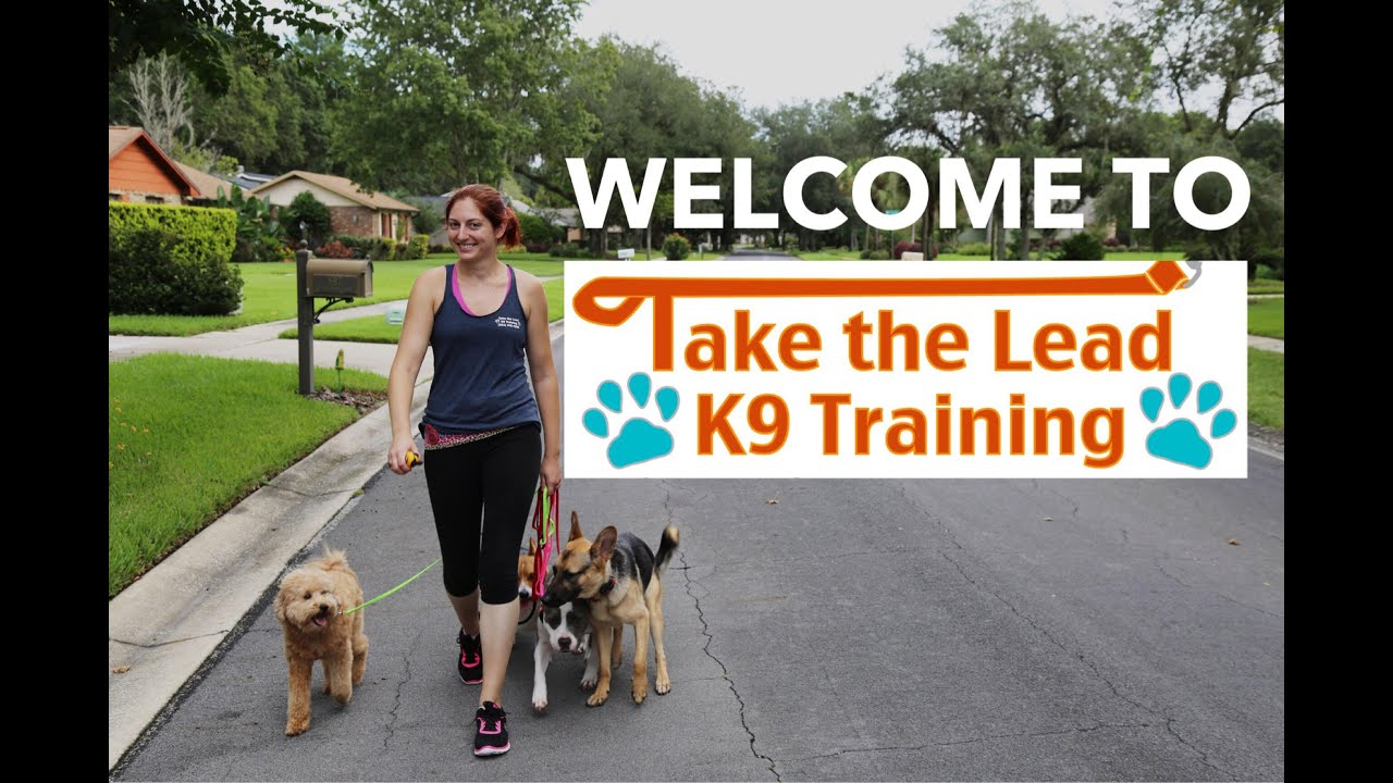 Orlando Florida Dog Training - Central FL Dog Trainer | Dog