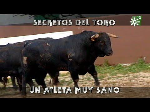 Desparasitar a los toros bravos de Reservatauro en Ronda | Toros desde  Andalucía