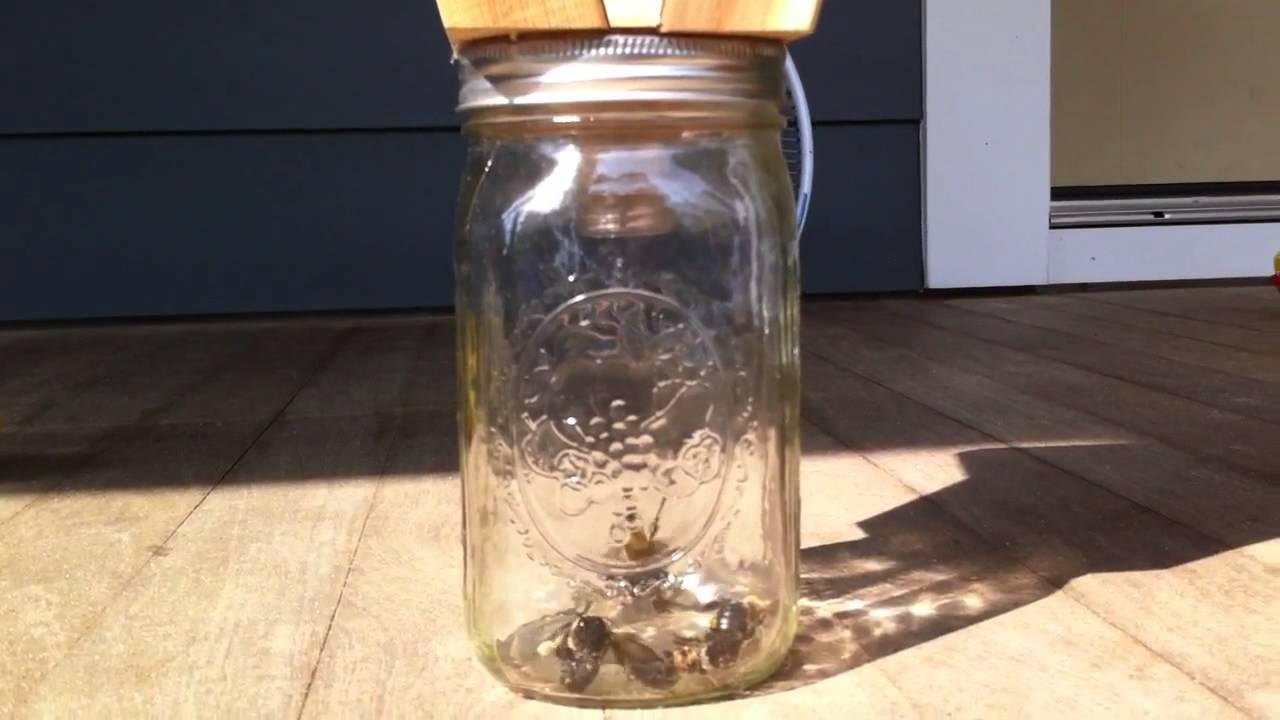 Designer Carpenter Bee Trap