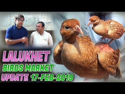 Lalukhet Sunday Birds Markets 17-2-2019 latest Updates (Jamshed Asmi Informative Channel) Urdu/Hindi