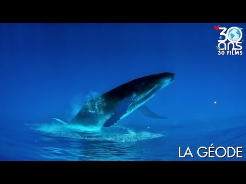 FESTIVAL 30 ANS - BALEINES