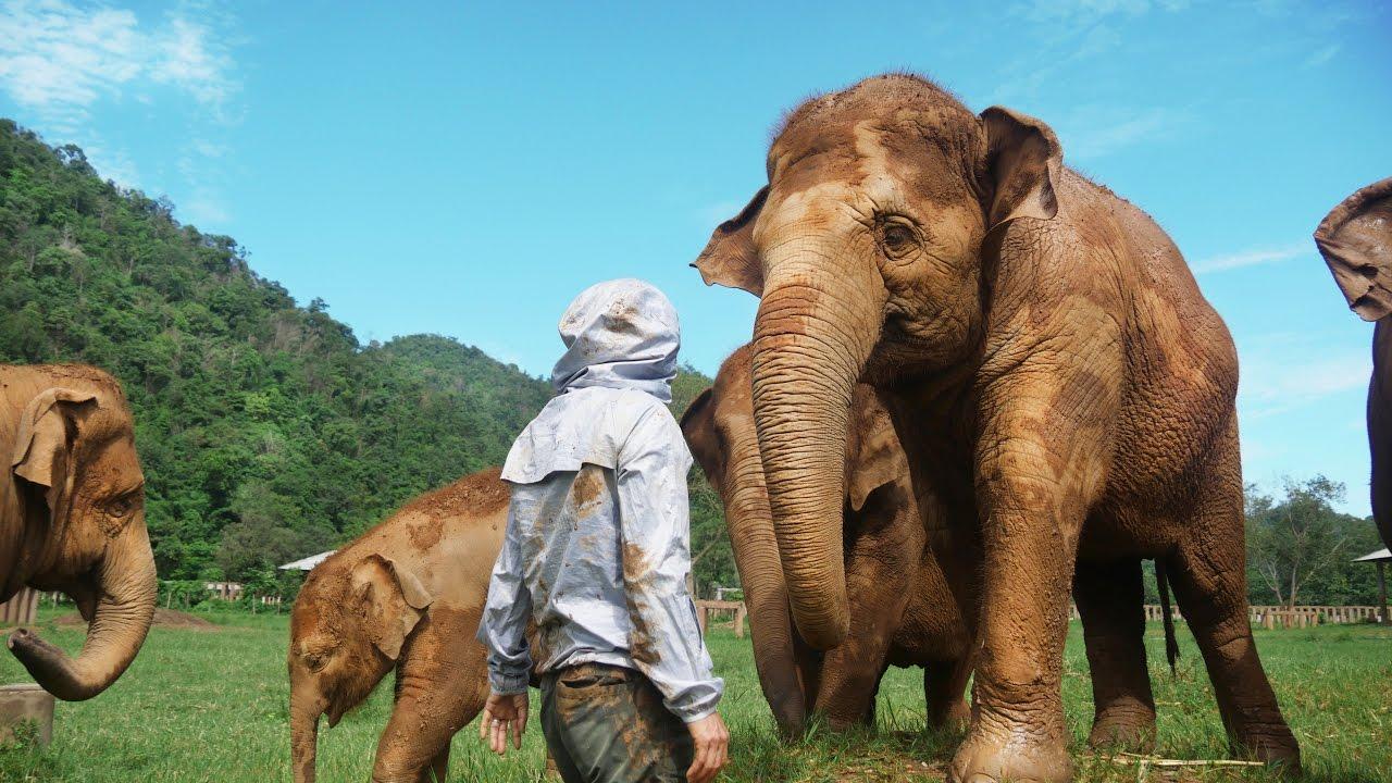 This Woman Rescued 200 Elephants - Elephant Nature Park