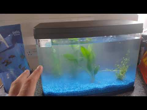 Aquarium Fish Tank! Cloudy Water Cycling Process Begins!