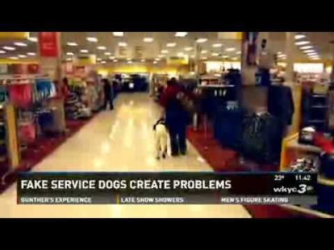 How to make your dog a service in fl
