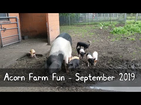 Acorn Farm | Mother Pig And Piglets | Horse Riding