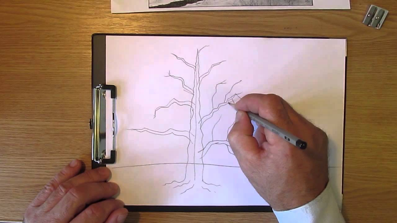 Картинки зеленый дуб