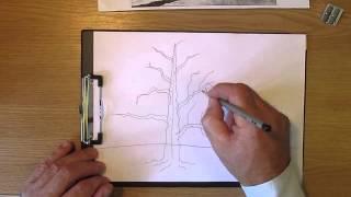 Как рисовать дерево дуб. Часть 1. Урок 11. How to draw oak tree. Lesson 11(В данном уроке рассматривается, как рисовать дерево дуб карандашом (how to draw oak tree): ствол дерева, ветки дерева,..., 2013-07-14T17:58:46.000Z)
