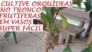 Aprenda a Cultivar Orquídeas nos Troncos de Frutíferas nos Vasos