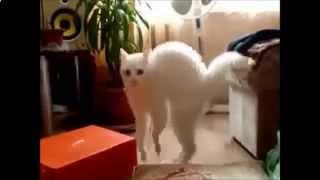 Самое смешное видео про кошек!