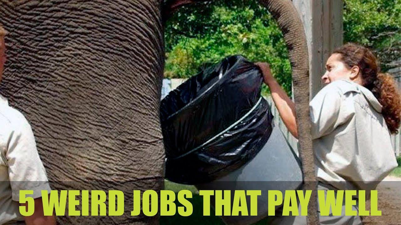 5 weird jobs that pays well 5 weird jobs that pays well