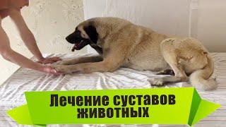 Лечение собак и животных микродвижениями