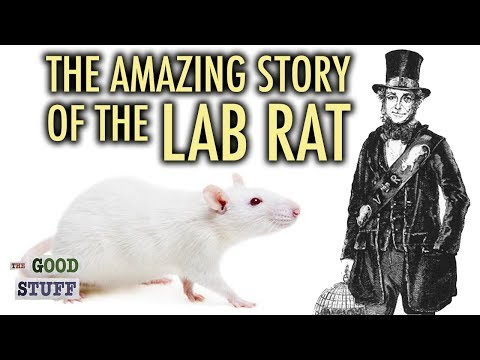 The Amazing Story of the Lab Rat