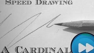 Quick Cardinal Drawing