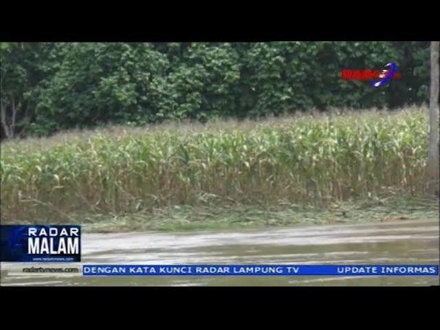 Akibat Banjir Rusak 3000 Hektar Lahan Warga Way Kanan