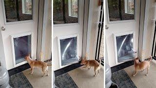 Dog Helps Scared Dog