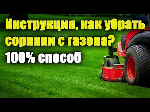 Как удалить СОРНЯКИ на газоне? Когда и чем обработать? ПОДРОБНАЯ ИНСТРУКЦИЯ. Одуванчики на газоне.