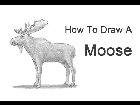 How to draw a moose youtube how to draw a moose thecheapjerseys Images
