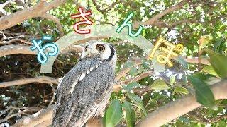日光浴も兼ねてお散歩! 音楽:魔王魂 【Twitter】 https://twitter.com...