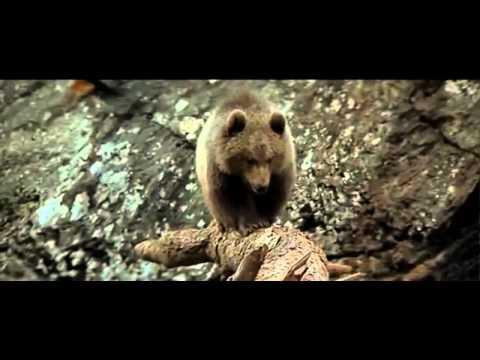 คลิปวีดีโอลูกหมี หนีตายจาก เสือคูก้าร์