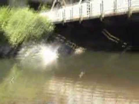 Jumping Off The Black Bridge