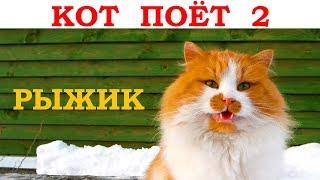 Поёт рыжий кот, 2 часть. Новогодняя песня - В лесу родилась елочка. Видео клип кавер / Singing cat 2