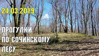 Сочинский лес весной  24 марта 2019 года  Субтропический рай в отдельно взятом городе