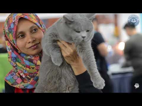 KELAB KUCING MALAYSIA - Pets Lover Fiesta 2018 International Cat Show - Part 10/11