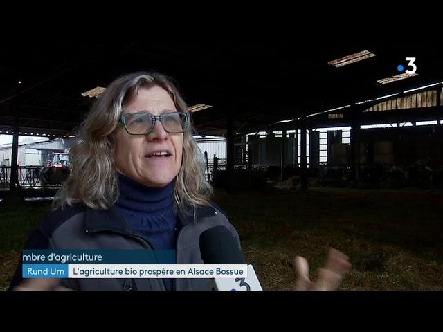 En Alsace Bossue, une ferme sur trois s'est convertie à l'agriculture bio