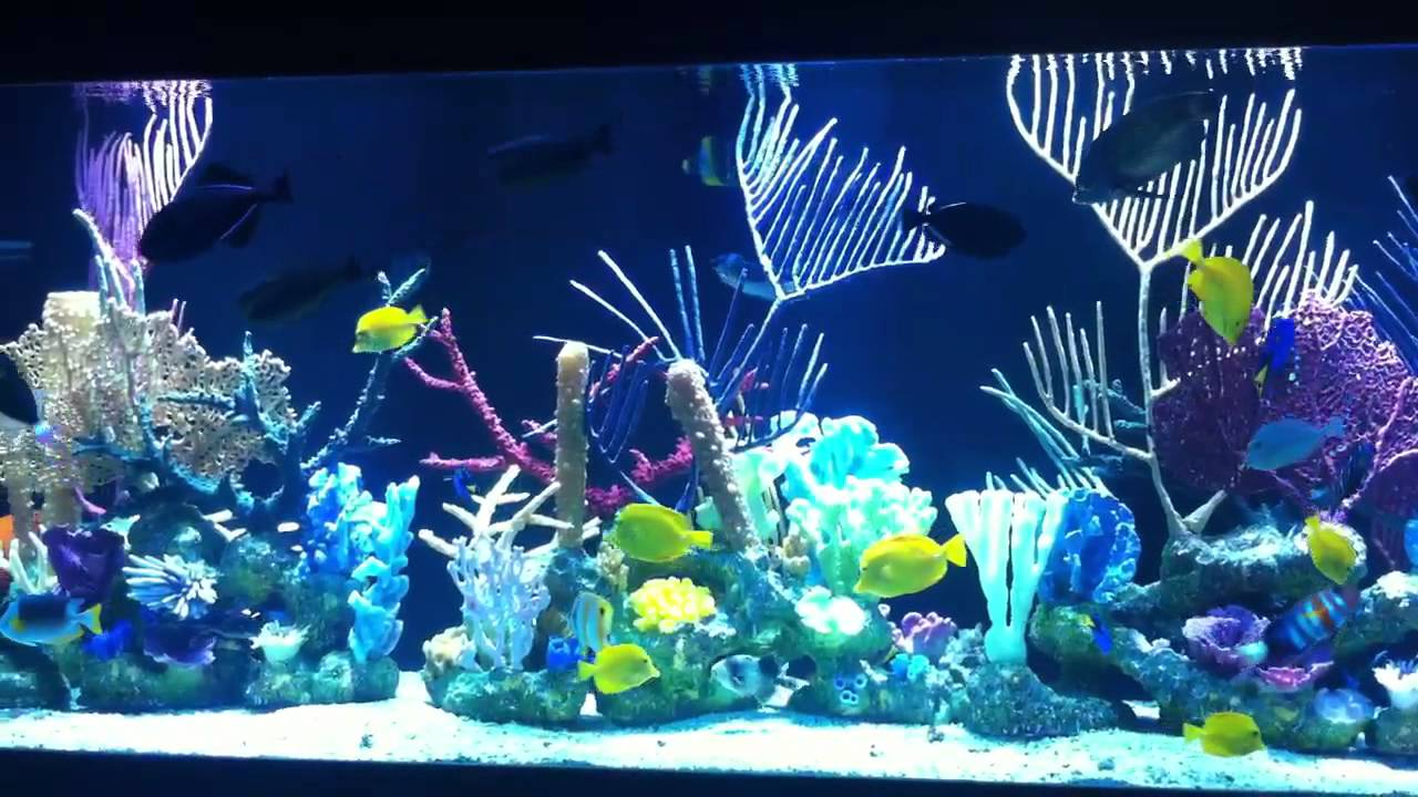 3d Fish Tank Wallpaper 1100 Gallon Salt Water Aquarium With With In Living Color