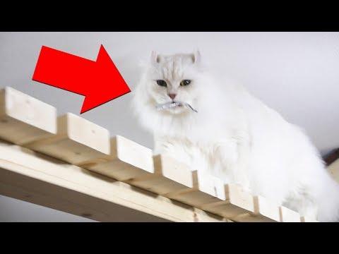 獲物を大事にくわえて運ぶ猫が可愛い!!!