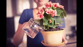 КОПЕЕЧНАЯ ПОДКОРМКА для ШИКАРНОГО цветника дома
