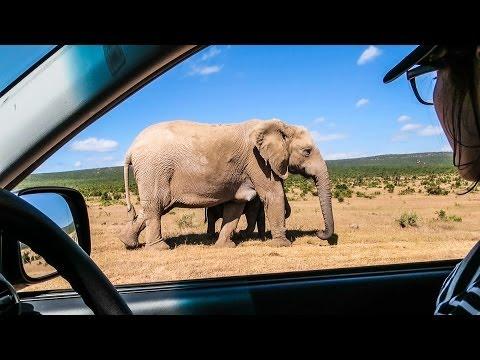 ELEPHANT GETS TOO CLOSE