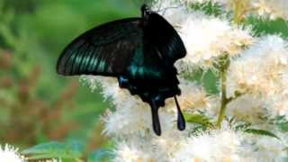 Очень красивая бабочка