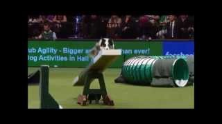 Top Agility Dog: One Of The Worlds Fastest Dogs!