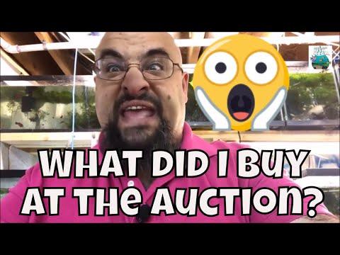 What Did I Buy At The BCAS Auction Aquarium Fish Room VLOG