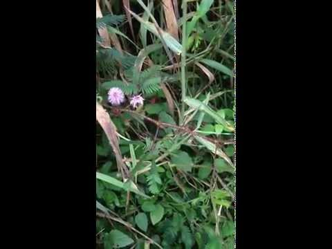 Hawaii Exotic Plants