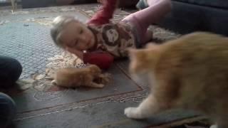 Кошка забрала котенка//Прикольные коты//