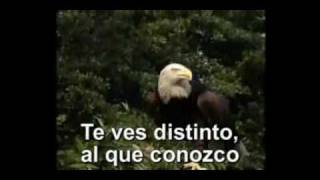 Karaoke Vuela Aguila Pista