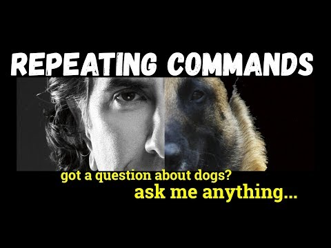 Using Commands too Often - Repeating Commands is Not Beneficial - Dog Training Video