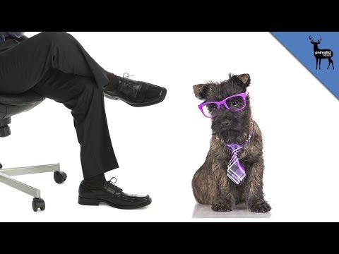 Why You Should Bring Your Dog To Work